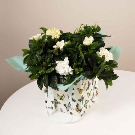 Plants - Summer Gardenia Gift Bag - Image 2