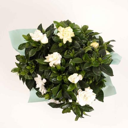 Plants - Summer Gardenia Gift Bag - Image 3