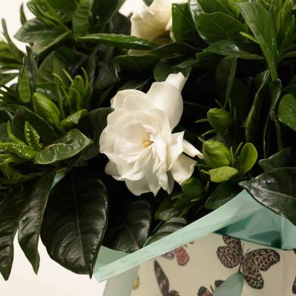 Plants - Summer Gardenia Gift Bag - Image 4