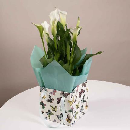 Plants - Calla Lily Gift Bag - Image 2