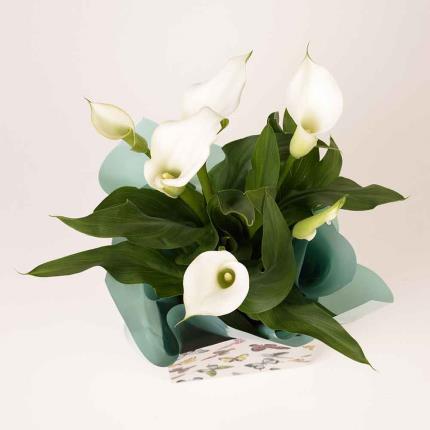 Plants - Calla Lily Gift Bag - Image 4