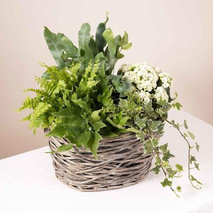Plants - Summer Indoor Basket - Image 2