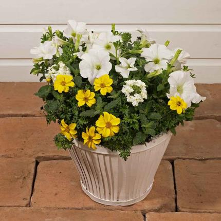 Plants - Summer Confetti Planter - Image 2