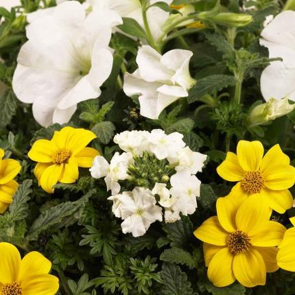 Plants - Summer Confetti Planter - Image 3
