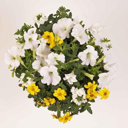 Plants - Summer Confetti Planter - Image 4