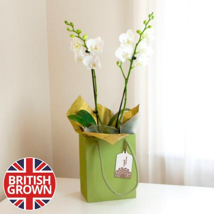 Plants - Luxury Orchid Gift Bag - Image 2