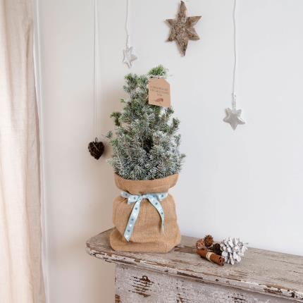 Plants - Christmas Tree in Jute - Image 2
