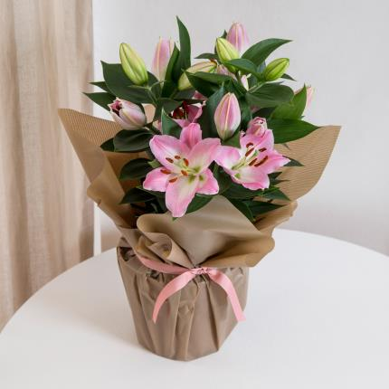 Plants - Gift Wrapped Lily  - Image 2
