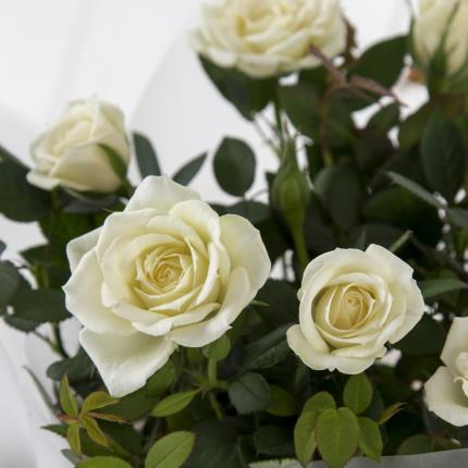 Plants - Personalised White Wine Hamper - Image 3