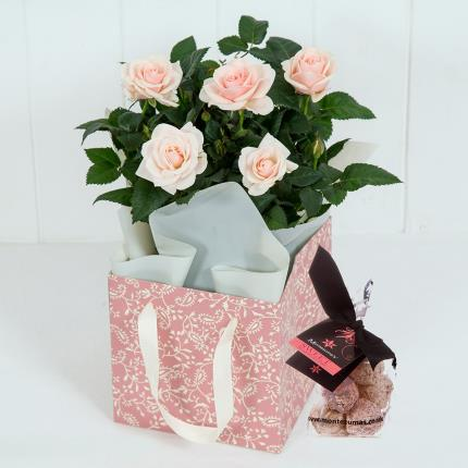 Plants - Rose Gift Bag - Image 2