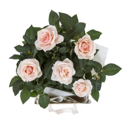 Plants - Rose Gift Bag - Image 3