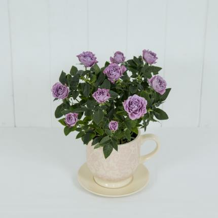 Plants - Rose Tea Cup - Image 2