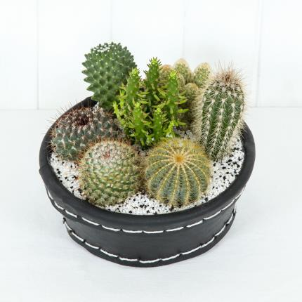Plants - Summer Cactus Tyre - Image 2