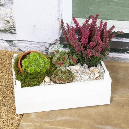 Plants - Heather & Succulent Crate - Image 2