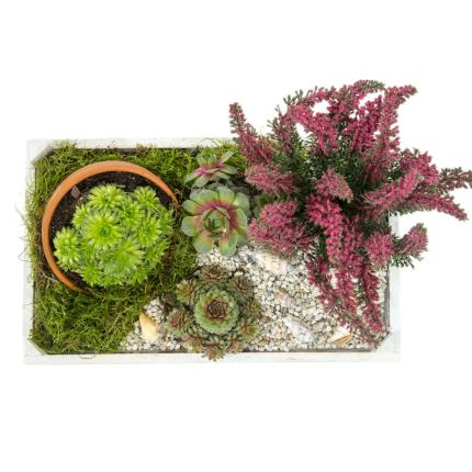Plants - Heather & Succulent Crate - Image 3