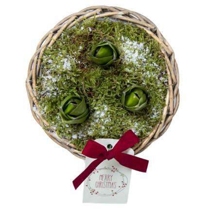 Plants - Christmas Hyacinth Basket  - Image 3