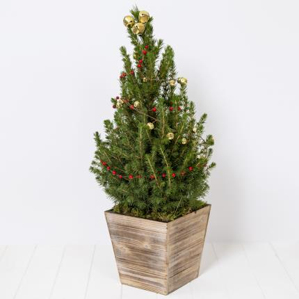 Plants - Indoor Christmas Tree - Was £38 Now £33  - Image 2