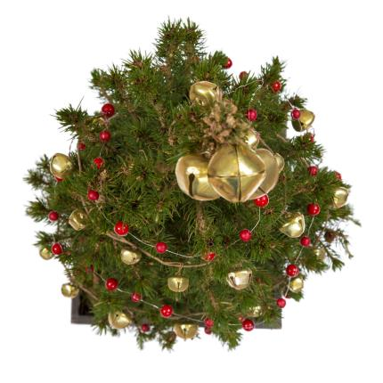 Plants - Indoor Christmas Tree - Was £38 Now £33  - Image 3