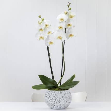Plants - Orchid Globe - Image 2