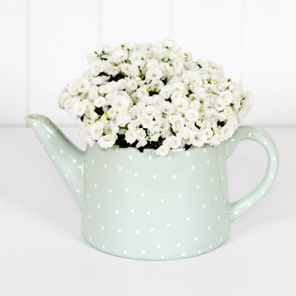 Plants - Mother's Day Spotty Teapot - Image 2