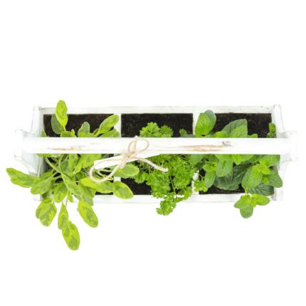 Plants - Herb Chalkboard Planter - Image 3