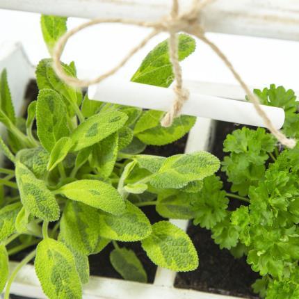 Plants - Herb Chalkboard Planter - Image 4