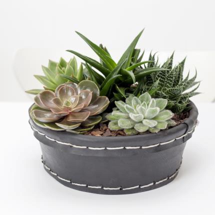 Plants - Succulent Bowl - Image 2