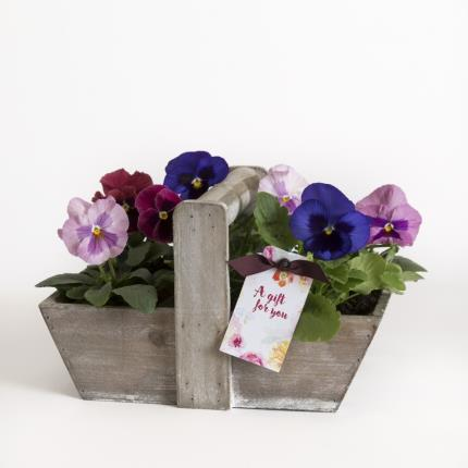 Plants - The Pansy Trug - Image 2