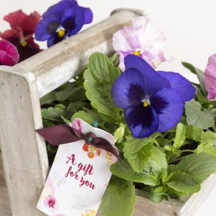 Plants - The Pansy Trug - Image 3