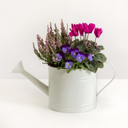 Plants - The Autumn Watering Can - Image 2