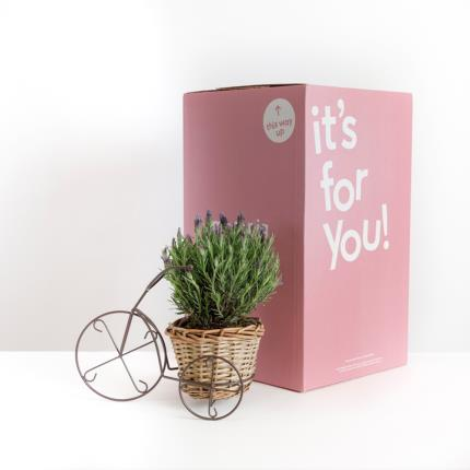Plants - The Summer Lavender Bicycle - Image 4
