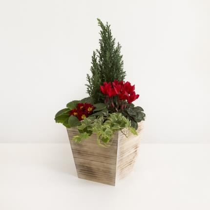 Plants - The Christmas Outdoor Planter