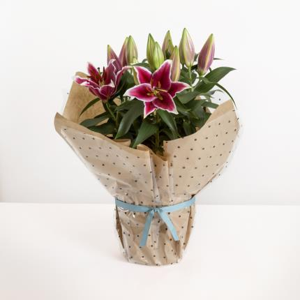 Plants - The Gift-Wrapped Lilies - Image 2