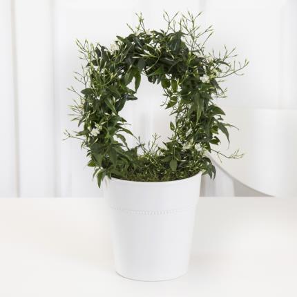 Plants - Scented Jasmine Hoop  - Image 2