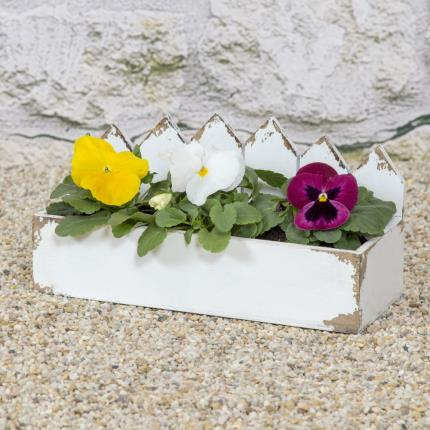 Plants - Outdoor Pansy Planter - Image 2