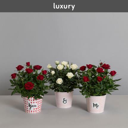 Plants - The You & Me Rose Tins - Image 2