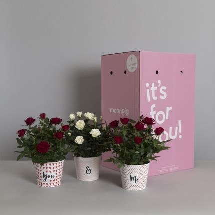 Plants - The You & Me Rose Tins - Image 4