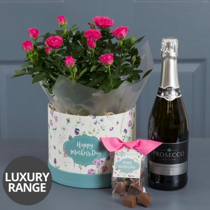 Plants - Mother's Day Prosecco Hatbox with Truffles - Image 2