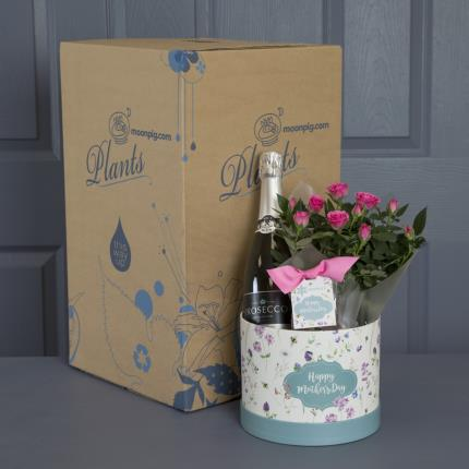 Plants - Mother's Day Prosecco Hatbox with Truffles - Image 4
