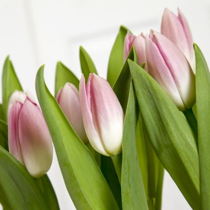 Plants - Mother's Day Pink Tulip Heart Planter - Was £30, Now £27  - Image 3