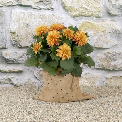 Plants - Sunset Dahlia Planter  - Image 2