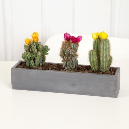 Plants - Flowering Cacti Crate  - Image 2