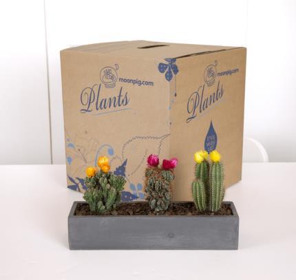 Plants - Flowering Cacti Crate  - Image 4