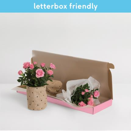 Plants - The Letterbox Pink Rose - Image 2