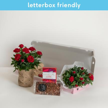 Plants - The Letterbox Love Gift Set - Image 2