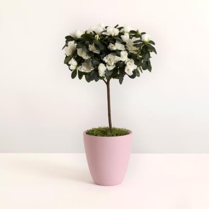Plants - The Azalea Ceramic - Image 2
