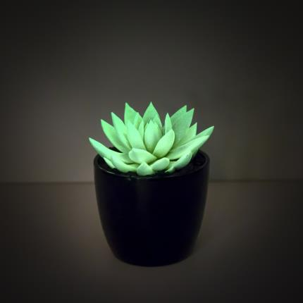 Plants - The Glow in the Dark Succulent - Image 3