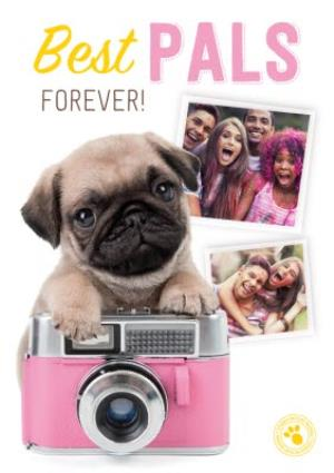 Greeting Cards - Best Pals Pug Camera Photo Upload Card - Image 1